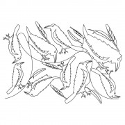 Raven Pano Pattern