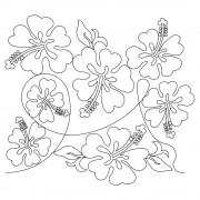 Hibiscus Pano