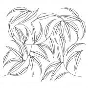 Eucalyptus Pano 2